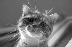 Look in the cats eyes. Photo by Zsuzsanna Kalemandra Magura