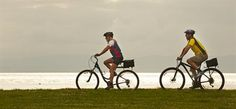 Join Coromandel Adventures and experience the Hauraki Rail Trail, a true Coromandel Peninsula activity Countryside, Cycling, Trail, Scenery, Tours, Activities, Adventure, History, Lush