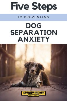 Five Steps to Preventing Dog Separation Anxiety | Savory Prime Pet Treats