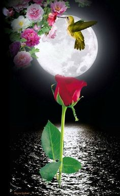 Jó éjszakát = Good Night - love the moon, hummingbirds, and flowers. Beautiful Moon Images, Beautiful Flowers Wallpapers, Beautiful Roses, Good Night Messages, Good Night Wishes, Good Night Sweet Dreams, Good Night Flowers, Pretty Flowers, Good Night Image