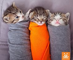 #Snuggles with #kittens! #adorable #cute #cats