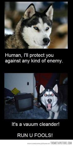 HAHAHA- they're all the same!!!  oh boy my puppy has the same defence mechanism to the vacuum!!!!