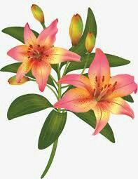 FLOR DE LIZ Flower Art Drawing, Very Beautiful Flowers, Fabric Paint Designs, Flower Silhouette, Fruit Painting, Flower Clipart, Botanical Drawings, Bunch Of Flowers, Flower Pictures