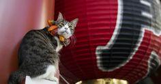 Au Japon, chats et chiens se font bénir pour la nouvelle année