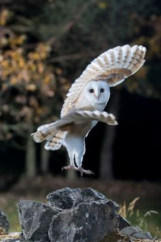A collection of owl pictures and items that I like! Nature Animals, Animals And Pets, Baby Animals, Funny Animals, Cute Animals, Owl Photos, Owl Pictures, Beautiful Owl, Animals Beautiful