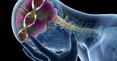 Когда уровни серотонина низкие, наши клетки не могут выделять достаточное количество кальция. При меньшем количестве кальция пищеварительные мышцы прекращают сокращаться настолько эффективно, и поэтому наше пищеварение становится медленнее и тяжелее. 2. Влияние низкого уровня серотонина на кишечник Этот факт интересен: почти 95% серотонина производится и хранится в кишечнике. Дефицит этого нейротрансмиттера с гормональными функциями может вызвать изменение функции кишечника. Таким образом…