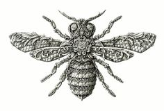 Illustration | The Bee, Little Wings collection by Alex Konahin, via Behance #drawing