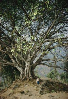 Eric Valli - High Himalaya Photos