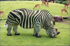 Zebraceros - Worth1000 Tutorials