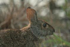Munching Rabbit | Endless Wildlife