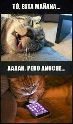 Various humor of every kind. Photographs, movies, jokes and laughs Up to date on a regular basis Funny Animal Memes, Funny Cats, Funny Animals, Funny Quotes, Memes Humor, Cat Memes, Spanish Jokes, Funny Spanish Memes, Funny Images
