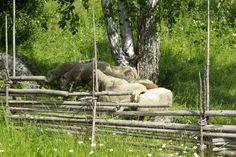 Linnansaaren kansallispuisto - Visit Savonlinna My Childhood, Finland, Natural Beauty, Summertime, Horses, Nature, Outdoor, Animals, Animales