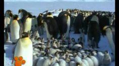 βιντεο για πιγκουίνους - YouTube