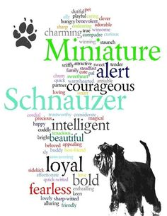 Miniature Schnauzer Word Art by artbarkers on Etsy