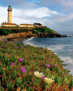 ✮ Pigeon Point Lighthouse with Spring Wildflowers, California