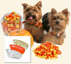 Everybody's favorite Halloween candy: Candy Corns! Our favorite Halloween combo!  $18.95www.softpaws.net #softpaws #dogs #madeinamerica