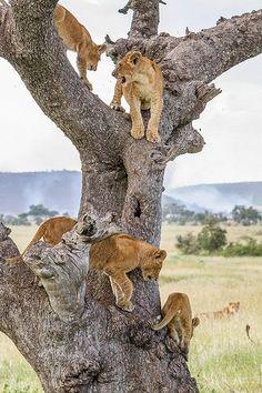 Alle kinderen in de boom :-) Nice pix!