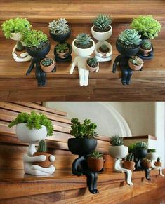 65 ideas for succulent pots planters Succulents In Containers, Cacti And Succulents, Planting Succulents, Planting Flowers, Cactus Plants, Flower Gardening, Decoration Cactus, Decoration Plante, Garden Art