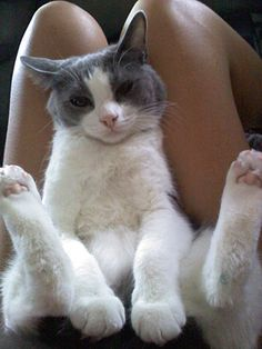 Cats | Cutest Paw