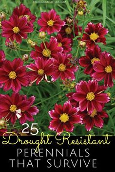 Searching for plants that get by with less water like drought resistant perennials? Plants that thrive and still look amazing! Drought Resistant Plants, Drought Tolerant Garden, Drought Resistant Landscaping, Outdoor Flowers, Outdoor Plants, Garden Yard Ideas, Lawn And Garden, Mailbox Garden, Water Plants