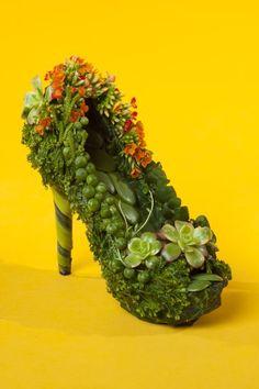 botanical shoe with kalanchoe 2, Françoise Weeks Joni Photo