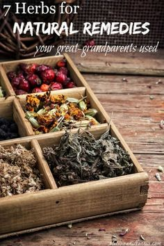 natural home remedies Learn the 7 best herbs for natural remedies that your great-grandparents knew. Use nature's medicine chest for common ailments. Grab these now to be prepared before you need them. I love the safety aspects mentioned, too! Holistic Remedies, Natural Health Remedies, Natural Cures, Natural Healing, Herbal Remedies, Natural Foods, Cold Remedies, Holistic Healing, Natural Beauty