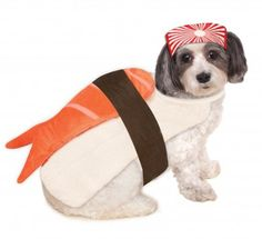 Sushi Pet Costume This costume comes with a headband. Now your pet can dress like your favorite food in our Sushi Pet Costume. Best Dog Halloween Costumes, Small Dog Costumes, Pet Costumes, Costume Ideas, Halloween Halloween, Sushi Costume, Baby Kostüm, Small Dogs, Best Dogs