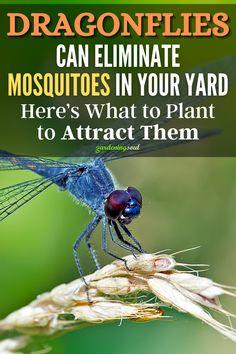 Garden Yard Ideas, Lawn And Garden, Garden Projects, Garden Crafts, Outdoor Projects, Garden Insects, Garden Pests, Organic Gardening, Gardening Tips