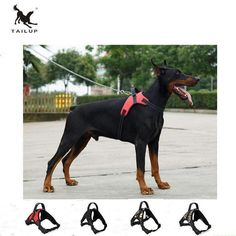 TAILUP Large Harness Oxford Vest