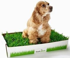 Potty training, in some cases called house training, is one of the most essential things that brand-new dog owners need to teach their young puppies or new grown pet dogs. Dogs Peeing In House, Dog Pee Pads, Puppy School, Dog Potty, Dog Houses, House Dog, Training Your Dog, Potty Training, Small Puppies
