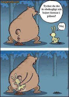 Björn bajs