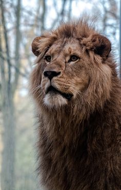 The King by Tobi on 500px*