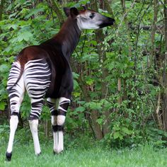16 Extremely Rare Animals, and the US Zoos Where You Can See Them