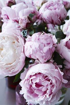 blossom // LILI CLASPE