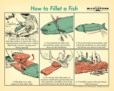 How to Filet a Fish Poster [PRINT ON DEMAND] – The Art of Manliness Store
