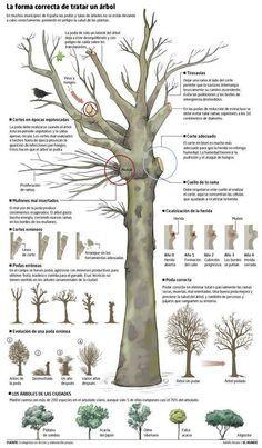 La forma correcta de tratar un árbol. Interesante infografía. @ecologistasenaccion