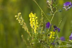 9617 http://kurtjohnsonphotography.tumblr.com/