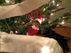 Scout hiding after wrapping our tree.