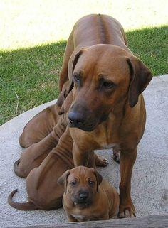 Patas Urbanas » Cães de médio porte