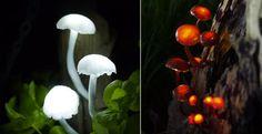 DIY: Mini-Pilzlampen leuchten aus allen Ecken #News #Wohnen