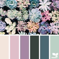 today's inspiration image for { succulent hues } is by @1lifethroughthelens ... thank you, Kristi, for another gorgeous #SeedsColor image share!