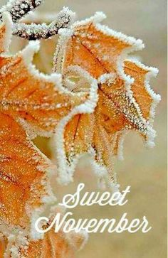 It was a Sweet November day when you were born son. Welcome November, Sweet November, November Month, Happy November, Hello November, New Month, November Images, November Pictures, November Quotes