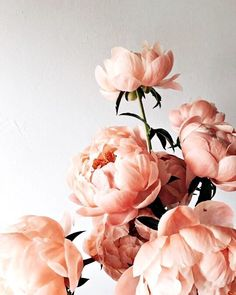 """birdasaurus: Lambert Floral Studio birdasaurus: """"Lambert Floral Studio """"Floral (disambiguation) To be floral is to pertain to flowers. Floral may also refer to: My Flower, Beautiful Flowers, Peony Flower, Ranunculus Flowers, Peony Rose, Carnations, Flower Vases, Rosa Rose, Flower Aesthetic"""