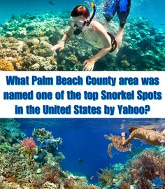 5 OUT OF 12 SNORKEL SPOTS IN FLORIDA MADE THE LIST OUT OF THE WHOLE COUNTRY!!! http://www.waterfront-properties.com/blog/one-of-the-top-ranked-us-snorkel-spots-is-in-palm-beach-county.html