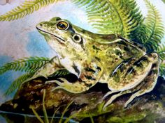 frog art | Flickr - Photo Sharing!