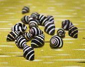 "Beehive Seashells .5""   25 pcs."
