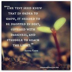A pequena semente sabia que para poder crescer, teria de ser lançada para a lama, ser coberta e ficar na escuridão e lutar para alcançar a luz!                                                                                                                                                      More