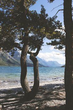 Trees On The Shore | Capture Alberta Contest