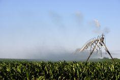 Irrigating corn near the Gypsum Hills.