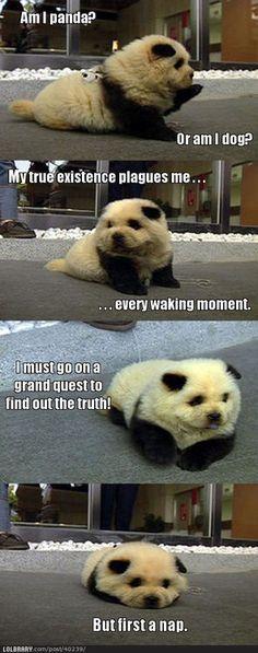 Panda Dog is the Cutest | LOLBRARY.COM